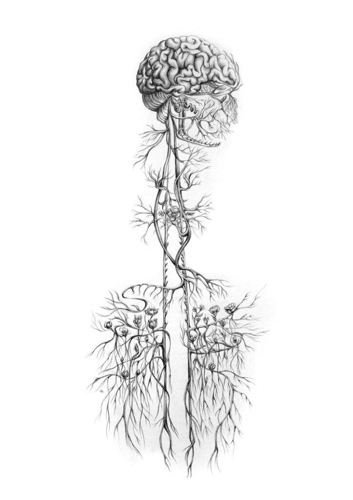 vagus nerv tonus vagusa